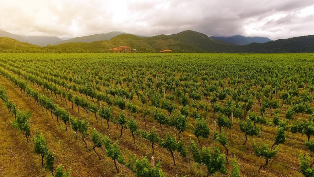 La Géorgie, pays du vin